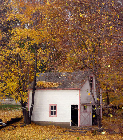 Falling leaves and neighbor's garage