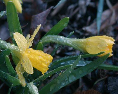 Tete a Tetes in the rain