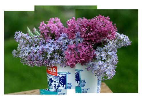 Birthday lilacs