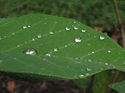 Rain pearls