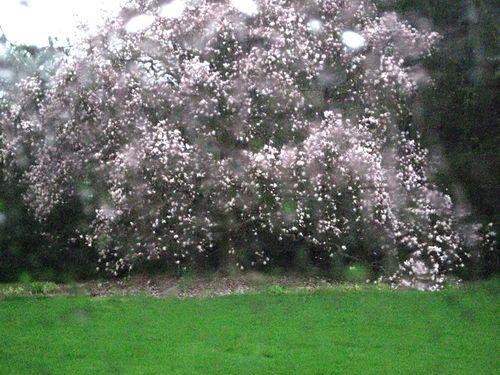 2a magnolia