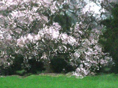 4b magnolia more rain