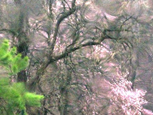 1 magnolia in rain