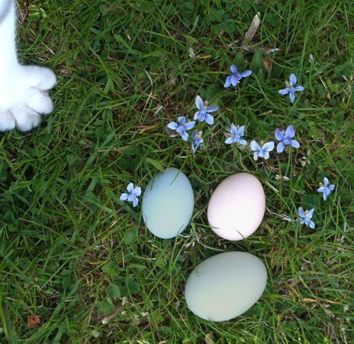 Easter Buddy