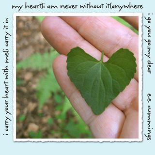 Heart leaf viola with poem