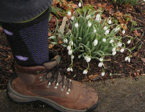 Snowdrops and my boot