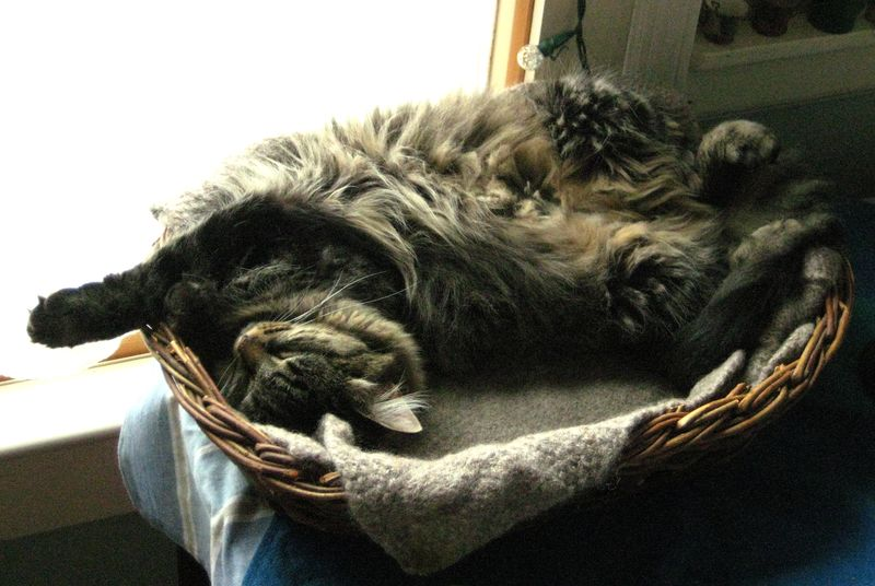 Lucy's basket