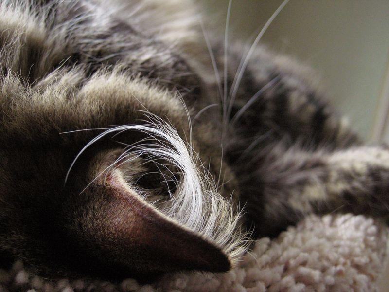 Lucy's ears