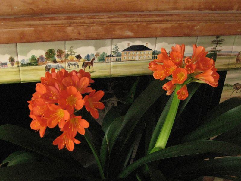 Fireplace tiles and clivia3
