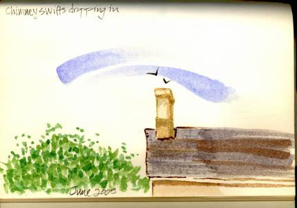 Chimney swifts72