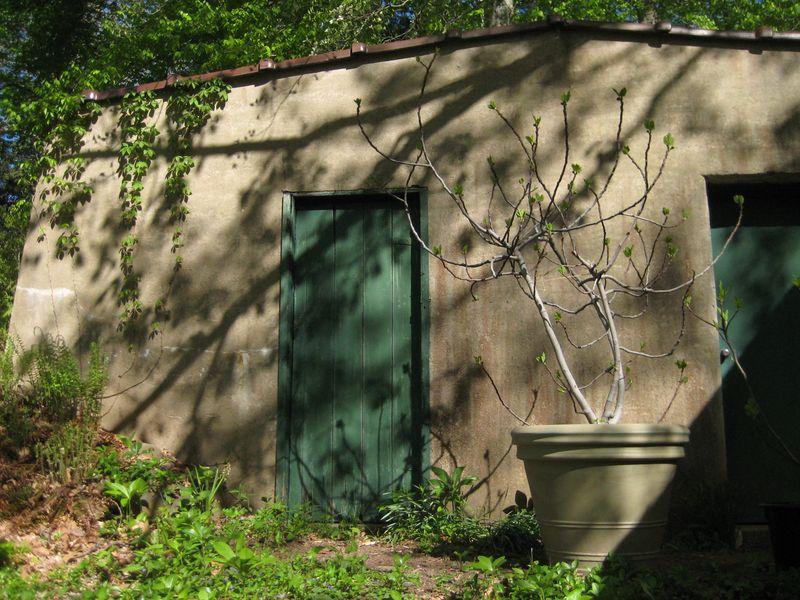 Root cellar spring