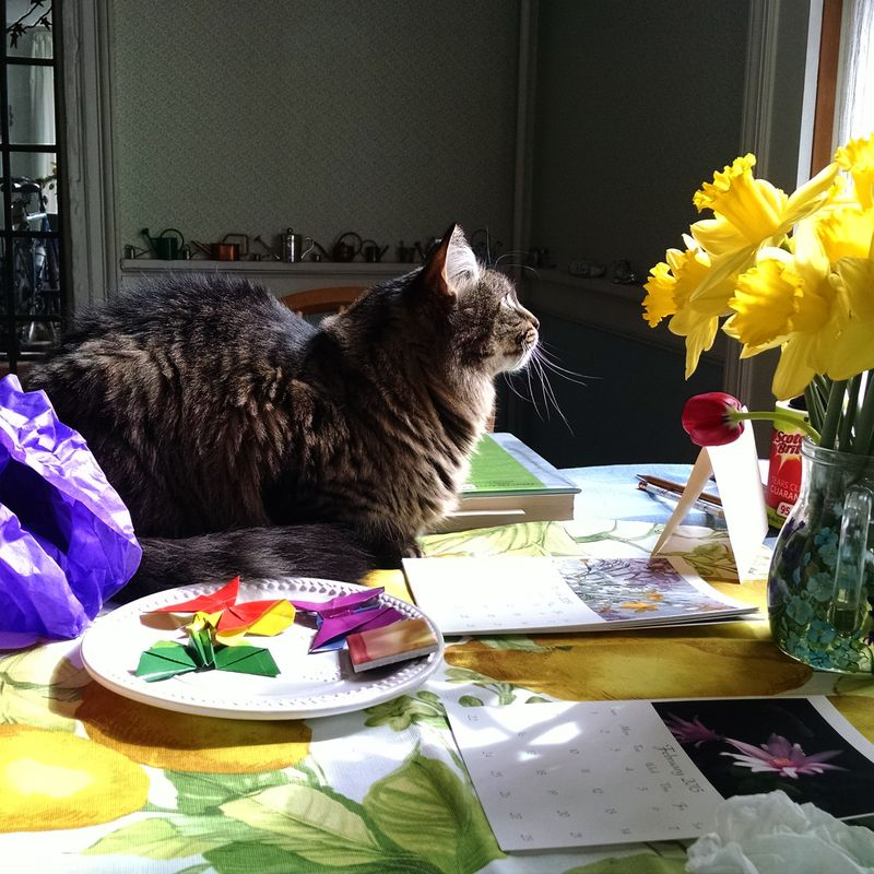 Lucy daffodils and some origami