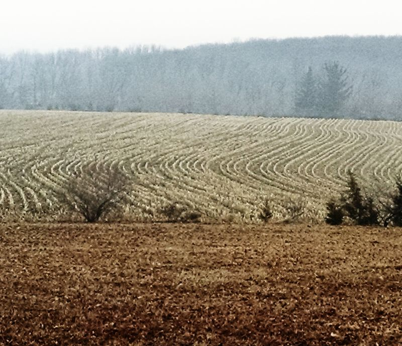 Foggy, corn stubbly fields and hills