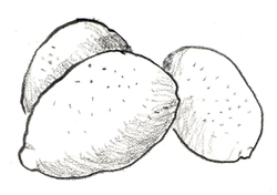 Lemons_3