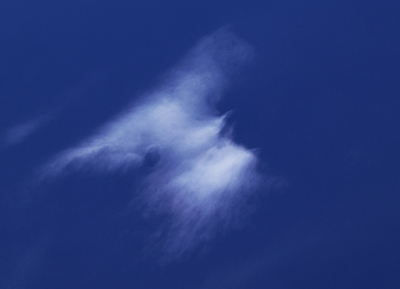 Bird_cloud