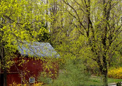 Spring_window