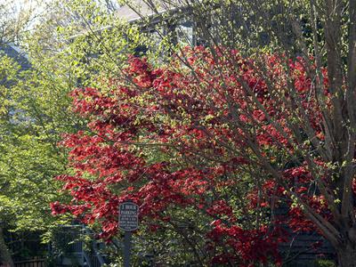 New_leaves