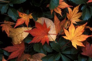 Fall_leaves_75_watermarked