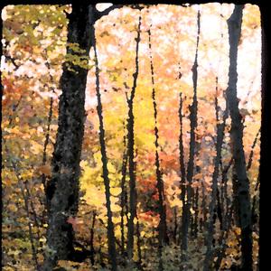 Fall_trees_3
