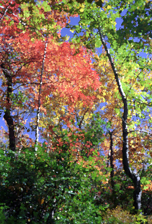 Fall_trees_mixed_72