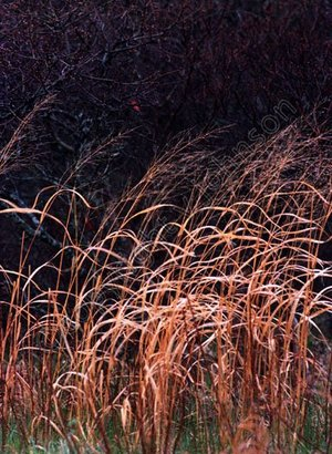 Grass_75_watermarked_1