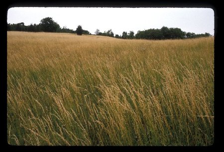 Grassesedited