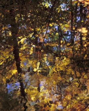 Leaves_in_water_2_edited_72