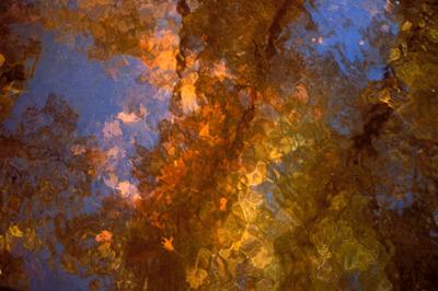 Leaves_in_water_75