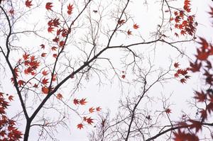 Leaves_sky_5_72