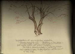 Magnolia_notes