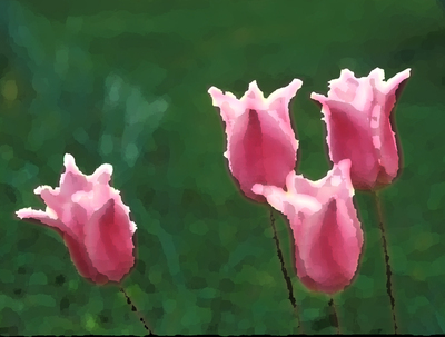 Pink_tulips_filtered_palette_knife