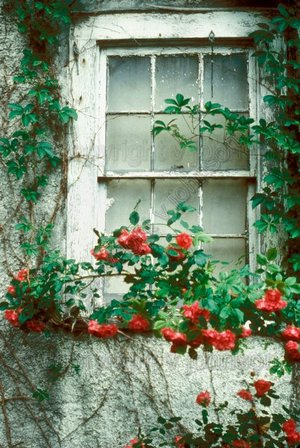 Rose_window