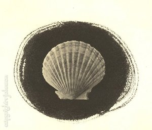 Scallop_salt_printweb_gallery_1