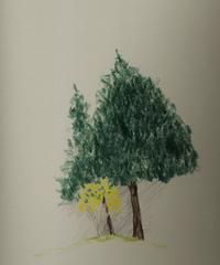 Small_forsythia_beside_evergreens