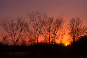Winter_sunset_75