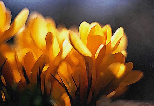 Yellow_crocus_paint_daubs